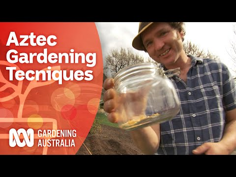 Aztec gardening techniques | Growing fruit and veg | Gardening Australia