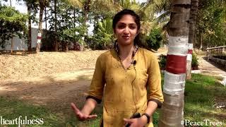 Gambar cover Protect Trees this Holi - Say no to Chemicals- Sandhya Krishnan