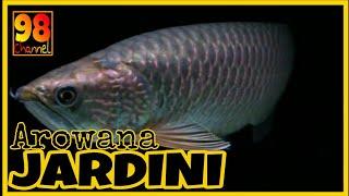 ARWANA JARDINI - Si Cantik dari Papua