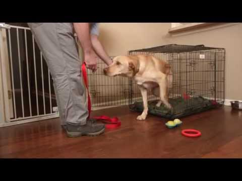 Mikkel Becker's Top Tips for Crate-Training an Adult Dog