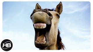 ЛОШАДИ. Самые Удивительные Факты про Лошадей