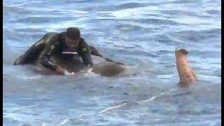 Sorprendente rescate de un elefante en alta mar
