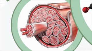 Fibromyalgia and Adrenal Fatigue