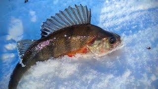 Рыбалка на окуня и плотву в конце января Глухозимье 2021