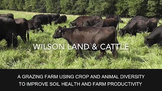 Wilson Land and Cattle