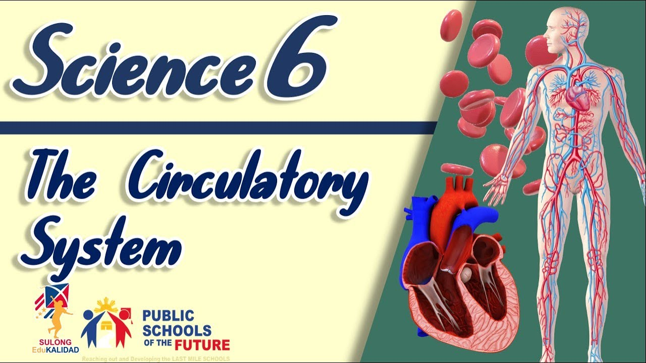 small resolution of GRADE 6- THE CIRCULATORY SYSTEM Science 6   SULONG EDUKALIDAD by Sir C.G. -  YouTube