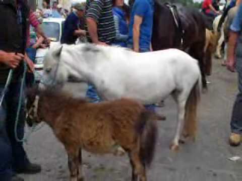 Cahirmee Horse Fair 2010