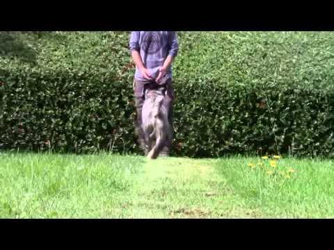 Tim Bleecker Dog Training