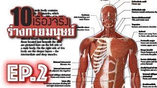 10 เรื่องจริงของ ร่างกายมนุษย์ (Human Body) ที่คุณอาจไม่เคยรู้ ~ EP.2