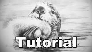 How to Draw an Otter / animal drawings / #27