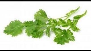 Benefits Of Coriander Leaves - Health Benefits Of Coriander Leaves - Health Tips - How To