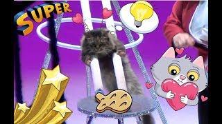 Смешные животные. Дрессированные кошки.  Цирк на льду. Казанский цирк. Ледовое шоу Айсберг. cats