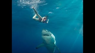 Sharks Attacking People part 2