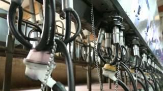 L'expertise Dumoulin (2/5) : Robotmilk et les robots de traite