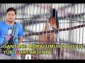 Pria Ini Nekat Gantang Murai Batu Usia  Bulan Di Tiket Utama Yuk Liat Aksinya  Mp3 - Mp4 Download
