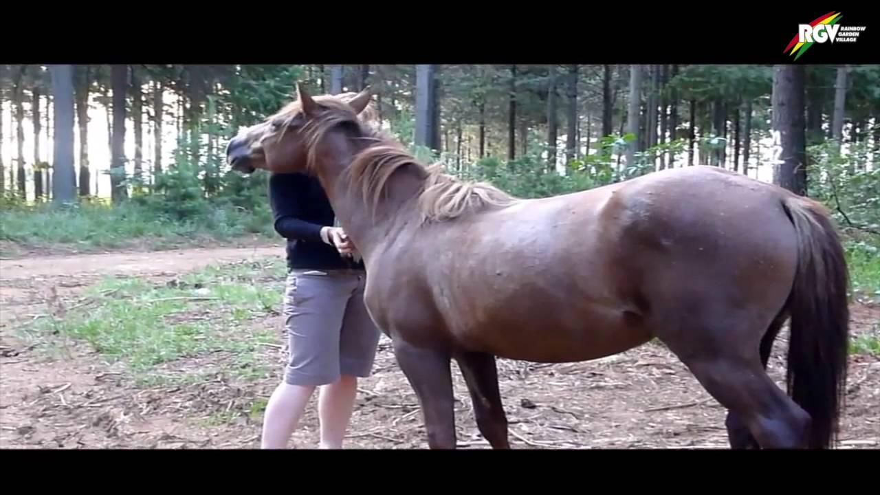 Pferdefarm