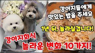 【화식의 장점 / 강아지 화식 자연식 후 놀라운 변화 …