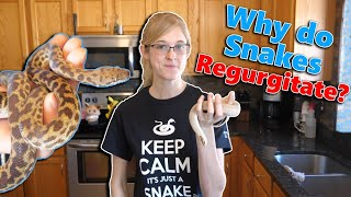 What Causes Snakes to Regurgitate (and how to prevent it)