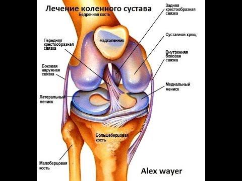 Артроз - Лечение артроза коленного сустава народными