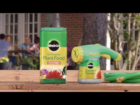 how-to-use-miracle-gro®-all-purpose-water-soluble-plant-food