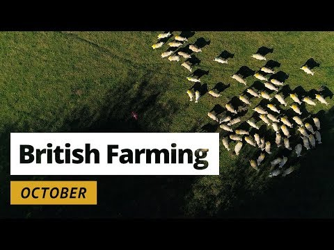 British Farming | 12 Months On A UK Farm: October