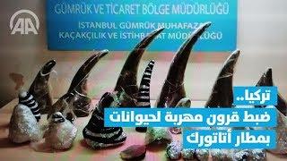 تركيا.. ضبط قرون مهربة لحيوانات بمطار أتاتورك