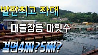 [피싱톡]발판최고 욕지도좌대 대물참돔 마릿수 걸면 40…