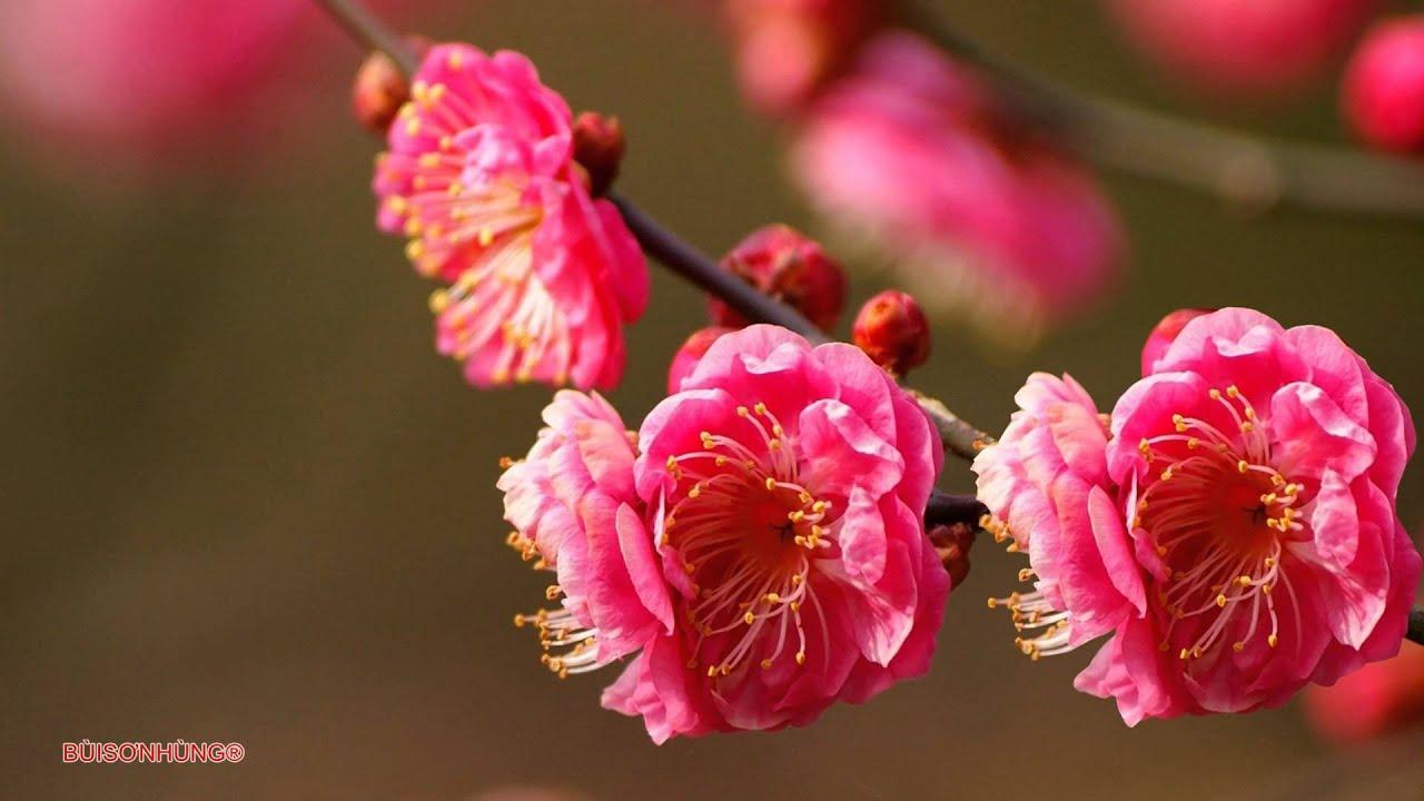 Một mùa xuân nho nhỏ-Trần Hoàn Thanh Hải Phương Nga