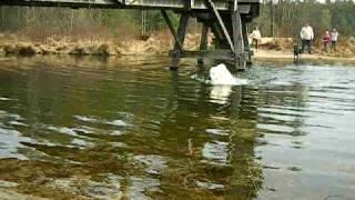 Schoonzwemmen voor honden ;)