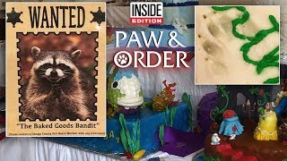 Paw & Order: Masked Bandit Eats Best-in-Show Baked Goods at County Fair thumbnail