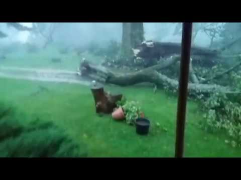 Trees Falling Compilation #3 No Music