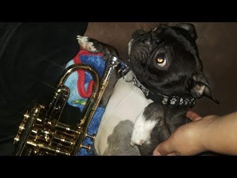 Gizmo best Trumpet Player