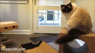 Ragdoll Cats Receive Omega Paw Ripple Board Scratch