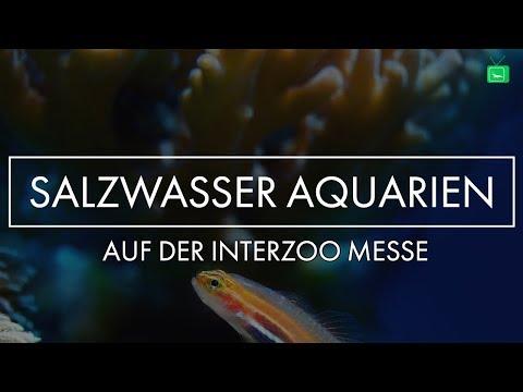 AMAZING SEA WATER TANKS | Interzoo 2018 | GarnelenTv