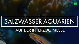 AMAZING SEA WATER TANKS | Interzoo 2018 | GarnelenTv