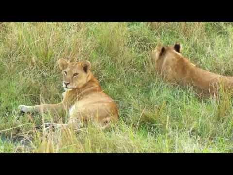 Ngorongoro Conservation Area Trip Video