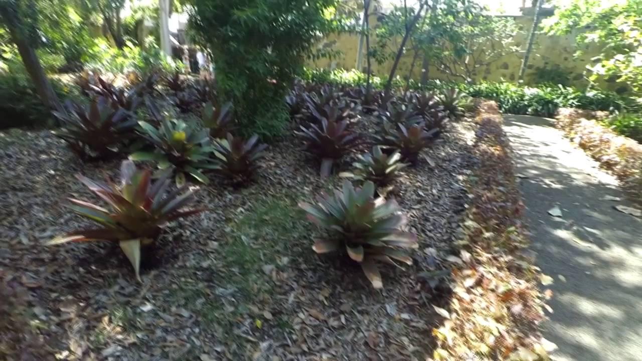 Botanical gardens jardin botanico puerto de la cruz tenerife 2016 youtube - Botanical garden puerto de la cruz ...