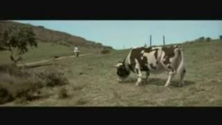 Бешенный бык