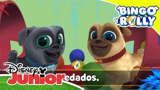 Baixar Bingo y Rolly: Disney Junior Music Party - 'Enredados' | Disney Junior Oficial