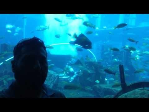 The Lost Chambers Aquarium, Atlantis, The Palm - Dubai - United Arab Emirates