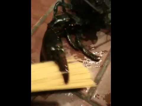 Lobster crush test (hotdog, pasta) thumbnail