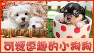 寶貝老闆寶寶日記—神秘美麗10【可愛小狗】-Mysterious Cute puppy