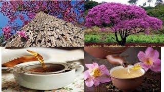 UOL -- Chá de ipê roxo – Benefícios e propriedades