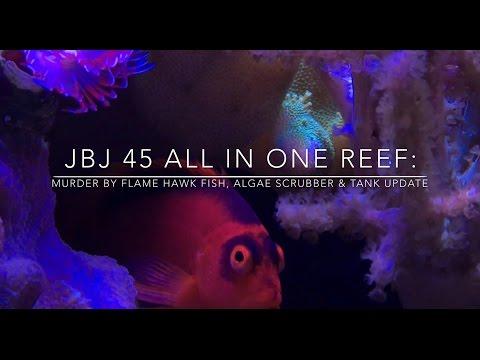 JBJ 45 All In One Reef: Murder by Flame Hawk fish, Algae Scrubber & Tank update