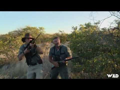 Hunting Elephants in Namibia