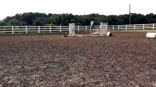 Northern Lights (Skai) Prelim/Training event horse FOR SALE