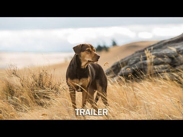 DIE UNGLAUBLICHEN ABENTEUER VON BELLA - Trailer - Ab 24.1.19 im Kino!