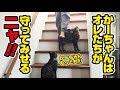 毎朝かーちゃんの階段警護をしてくれる猫!〜Cats guard Mama!〜