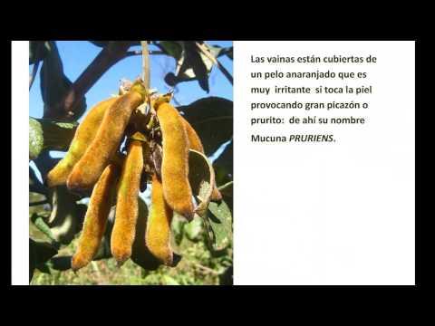 Dieta cetogenica parkinson