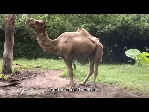 Zoo Taiping 2012 太平动物园 (HD)